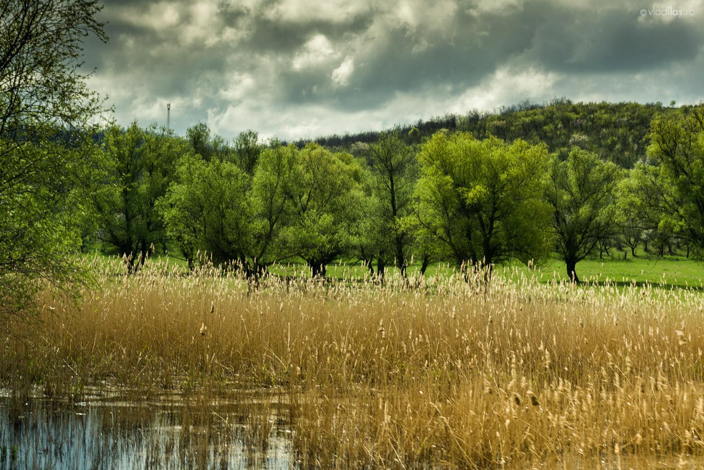 Peisaj moldovenesc